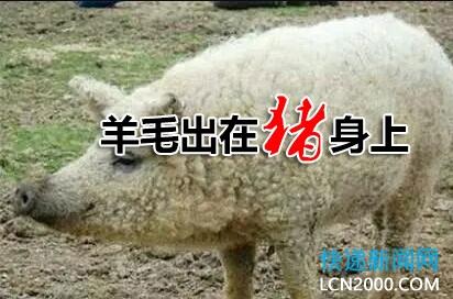 羊毛出在猪身上?派件涨1毛,收件涨5毛